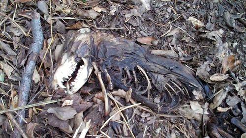 Voodoo Possum Rat Bird 0 00 05-08